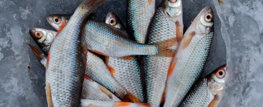 Opracuj aplikację blockchain do śledzenia ryb w Chile